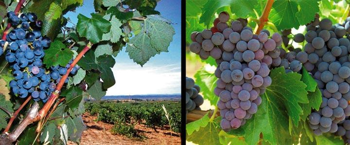 Rutas del vino de España, donde el placer es el guíaRutas del vino de España, donde el placer es el guía