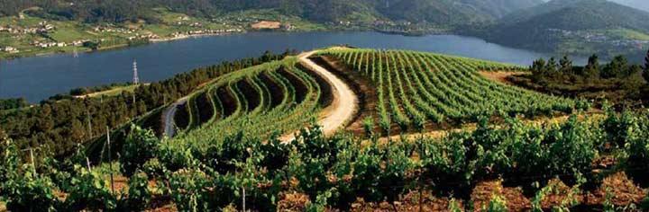 Rutas del vino de España, donde el placer es el guía