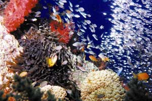 Buceo en la jordana Aqaba