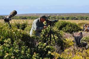 Observación de Aves en Sagres