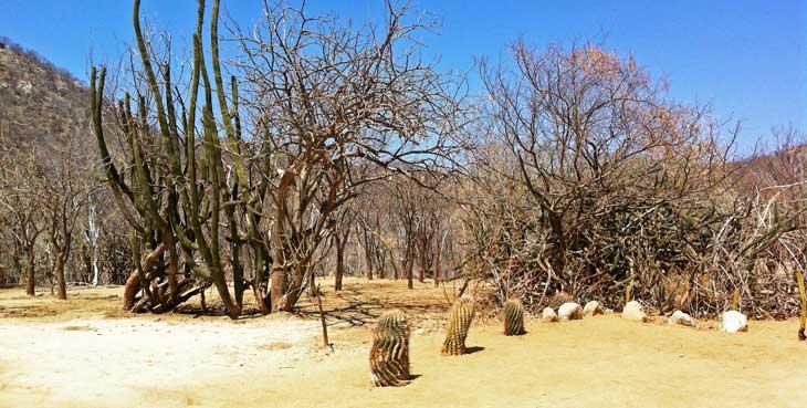 Desierto de Baja California/Foto Juan Coma
