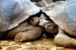 Ecuador limita los visitantes en las Galápagos