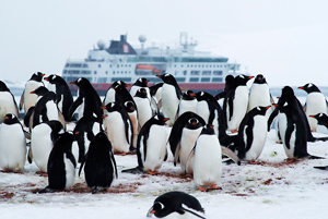 Navegar con Hurtigruten en 2013