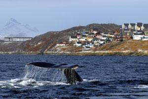 Iberocruceros inaugura nuevas rutas hacia Groenlandia e Islandia