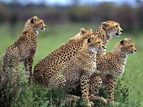 Kirunna Travel lanza una oferta para viajar a Kenia por tan sólo 1795 euros