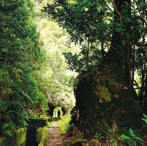 """Madeira celebra su III edición del Festival de senderismo y orientación """"Madeira Active"""""""