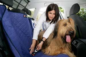 El 65% de las familias se llevará a su mascota de vacaciones