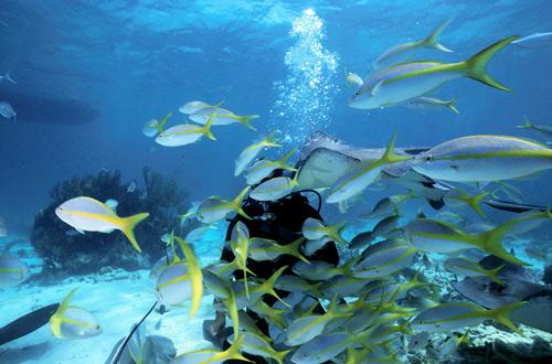 Submarinismo en Isla Mauiricio