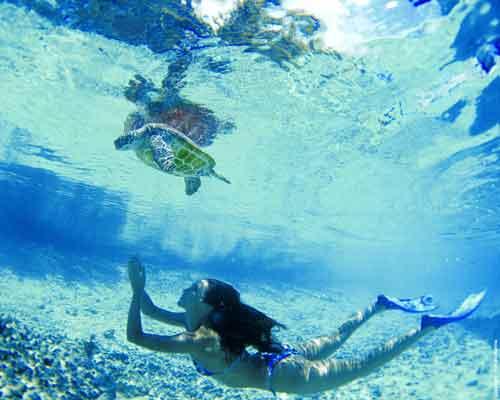 Salvamento de tortugas marinas en Tahití