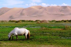 Mongolia: tras el rastro de Genghis khan por las infinitas estepas