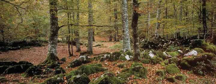 La Selva de Irati, en el Pirineo Occidental, una inmensa mancha verde de unas 17.000 hectáreas que se mantiene en estado casi virgen.