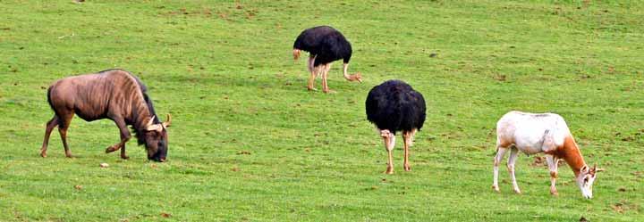 Fauna que habita en el Parque de la Naturaleza de Cabárceno