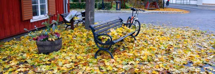 El otoño en Suecia en general, y en Estocolmo en particular, es realmente bello. Los tonos ocres, amarillos y marrones impregnan los árboles que esperan resignados la inminente caída de la hoja