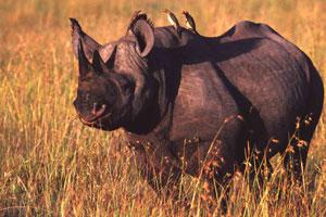 """""""Rhino Charge"""", aventura en Kenia por una buena causa"""