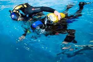Fira de Cornellà acoge la 12º edición del Salón de la Inmersión