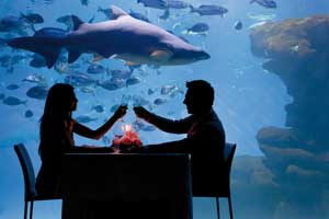 San Valentín en el Gran Azul del Palma Aquarium