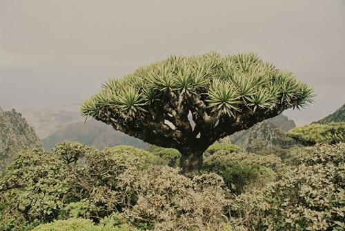 Archipiélago de Socotra, las Galápagos del Índico
