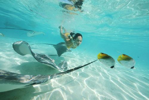 Mantas raya en Moorea Tahiti Tourisme ©G.LE BACON