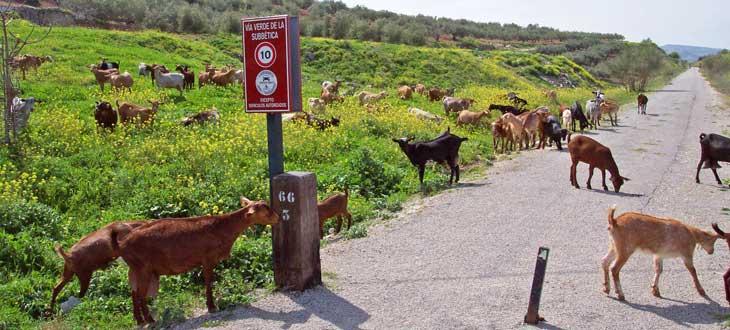 Vía Verde de la Subbética/Foto Mancomunidad de la Subbética