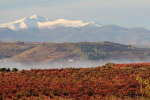 Doce nuevos miembros se unen a la Ruta del Vino de Rioja Alavesa