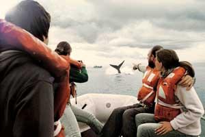 Comienza la temporada de avistamiento de ballenas en Argentina