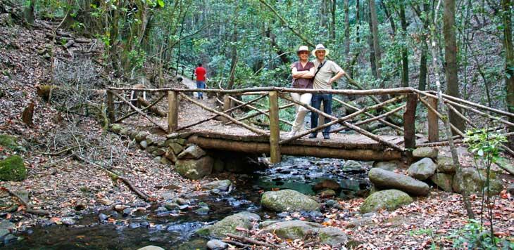 Bosque Cedro, en el Parque Nacional de Garajonay/Foto María Jesús Tomé
