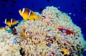 Fondos marinos en el Mar Rojo