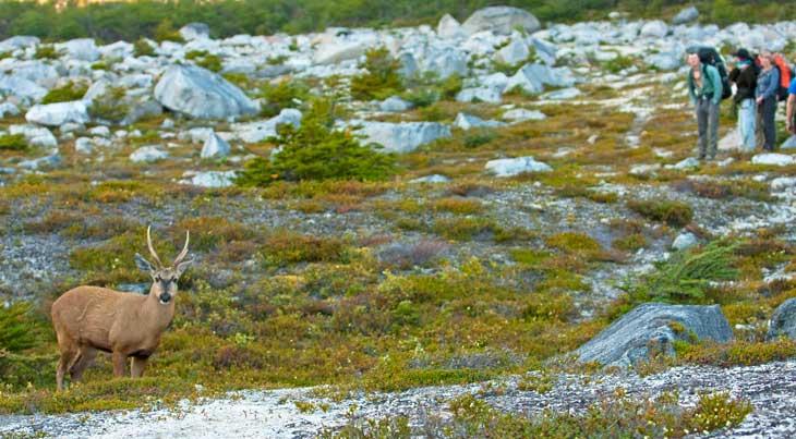 Ejemplar de huemul. Este animal aparece junto al cóndor en el escudo nacional de Chile/ Foto Ronny Belmar