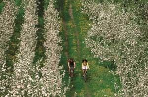 Viajar en primavera al Alto Adigio