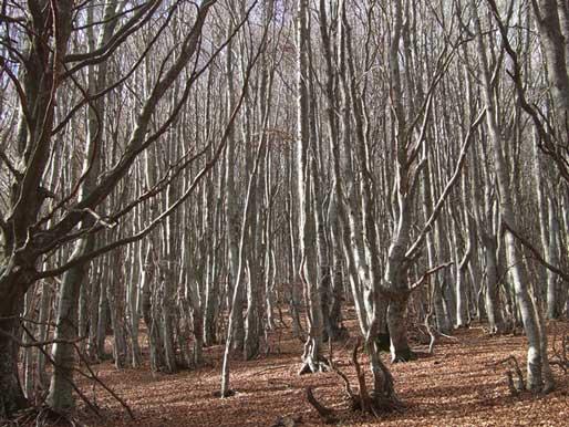 Hayedo del Montseny-Guilleries
